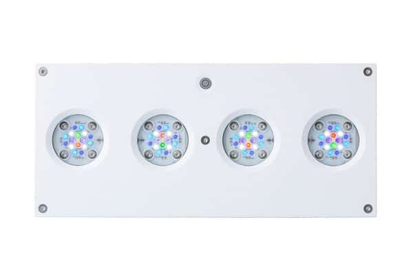 Hydra 64HD LED - White