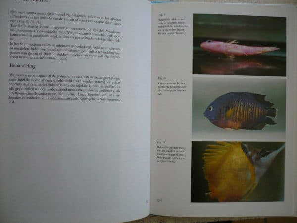 Diseases in marine aquarium fish Dr. Gerald Bassleer English